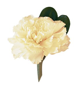 White Carnation Boutonniere in Big Rapids MI, Patterson's Flowers, Inc.