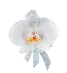 White Phalaenopsis Corsage in Etobicoke ON, Alana's Flowers & Gifts