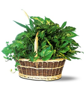 Green Garden Basket Deluxe in Derry NH, Backmann Florist