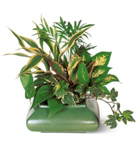 Green Garden Dish in Wellington FL, Wellington Florist