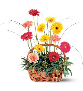 Uplifting Gerbera Basket in The Woodlands TX, Top Florist