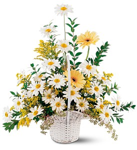 Drop of Sunshine Basket in Abington MA, The Hutcheon's Flower Co, Inc.