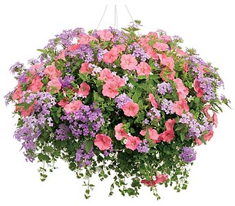 Mixed Hanging Basket in Big Rapids MI, Patterson's Flowers, Inc.