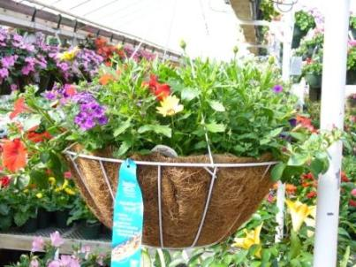 Hanging Basket in Fond Du Lac WI, Haentze Floral Co