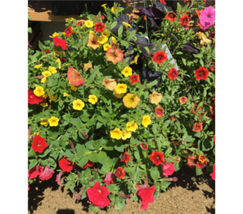 11 and 13 inch Mixed Hanging Basket-Colors Vary in Wyoming MI, Wyoming Stuyvesant Floral