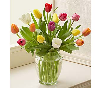 Multicolored Tulips, 15 Stems in Chicago IL, Sauganash Flowers