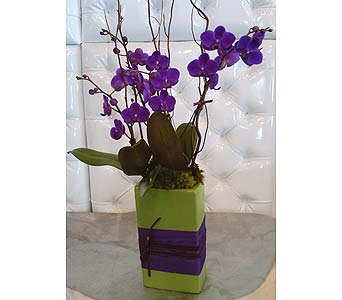 MINI PURPLE ORCHID 3 in Santa Monica CA, Santa Monica Florist