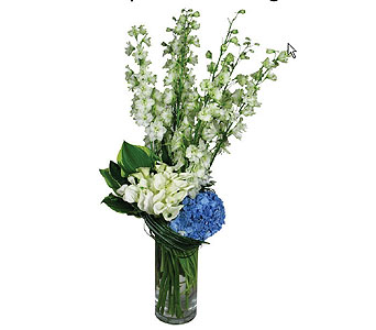 Delphinium Delight in New York NY, Fellan Florists Floral Galleria