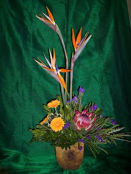 Bird of Paradise, Gerbera Daisy & Protea in Mount Vernon OH, Williams Flower Shop