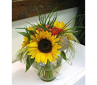 Sunflowers in Ginger in Newmarket ON, Blooming Wellies Flower Boutique