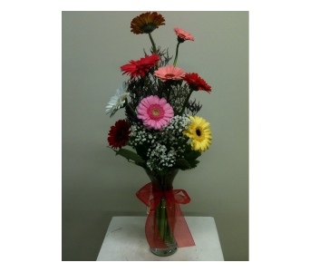 Glorious Gerberas in Naples FL, Gene's 5th Ave Florist