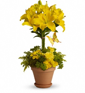 Yellow Fellow in Waukegan IL, Larsen Florist