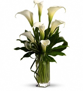 My Fair Lady by Teleflora in Murrells Inlet SC, Callas in the Inlet