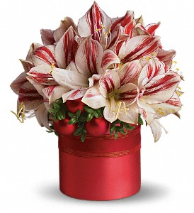 Teleflora's Peppermint Amaryllis in New York NY, Fellan Florists Floral Galleria