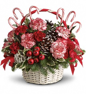 Candy Cane Christmas in Bayonne NJ, Sacalis Florist