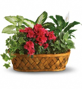 Plants Galore in Chesapeake VA, Lasting Impressions Florist & Gifts
