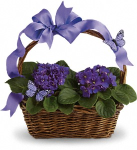Violets And Butterflies in Oakland MD, Green Acres Flower Basket