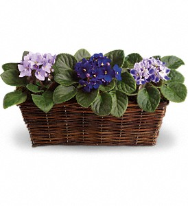 Sweet Violet Trio in Grand Prairie TX, Deb's Flowers, Baskets & Stuff