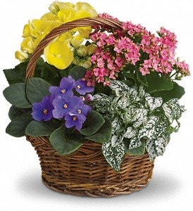 Spring Has Sprung Mixed Basket in Trumbull CT, P.J.'s Garden Exchange Flower & Gift Shoppe