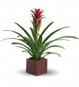 Teleflora's Bromeliad Beauty in Little Rock AR, The Empty Vase