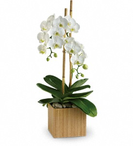 Teleflora's Opulent Orchids in Dubuque IA, New White Florist