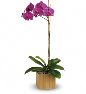 Teleflora's Imperial Purple Orchid in Mount Morris MI, June's Floral Company & Fruit Bouquets