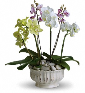 Regal Orchids in Yorba Linda CA, Garden Gate