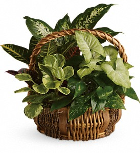 Emerald Garden Basket in Mississauga ON, White Lotus Flowers