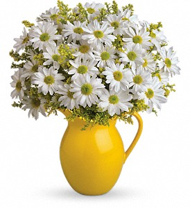 Teleflora's Sunny Day Pitcher of Daisies in Woburn MA, Malvy's Flower & Gifts