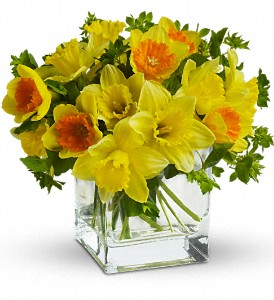 Teleflora's Daffodil Dreams in Newburgh NY, Foti Flowers at Yuess Gardens