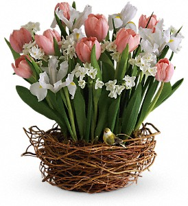 Tulip Song in West Memphis AR, Accent Flowers & Gifts, Inc.