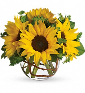 Sunny Sunflowers in Thorold ON, A Yellow Flower Basket