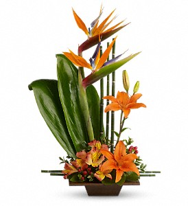 Teleflora's Exotic Grace in Bellefontaine OH, A New Leaf Florist, Inc.