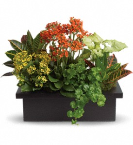 Stylish Plant Assortment in Thorold ON, A Yellow Flower Basket