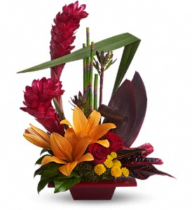 Teleflora's Tropical Bliss in Dubuque IA, New White Florist