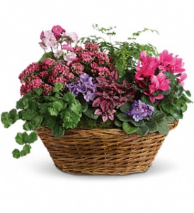 Simply Chic Mixed Plant Basket in Dublin OH, Red Blossom Flowers & Gifts