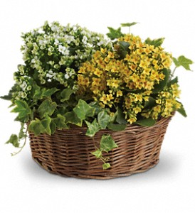Basket of Joy in Oshkosh WI, Flowers & Leaves LLC