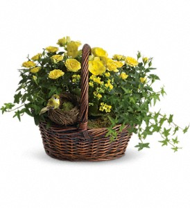 Yellow Trio Basket in Highland CA, Hilton's Flowers