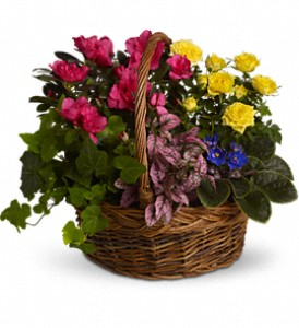 Blooming Garden Basket in Hendersonville NC, Forget-Me-Not Florist