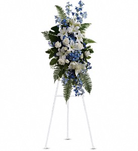 Ocean Breeze Spray in Fairfield CT, Town and Country Florist