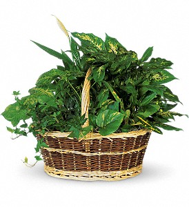 Large Basket Garden in Houston TX, Nori & Co. Llc Dba Rosewood