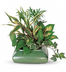 Small Garden Dish in Kissimmee FL, Golden Carriage Florist