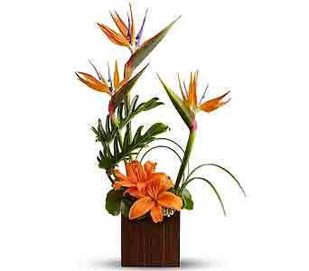 Orange Paradise in Rancho Santa Fe CA, Rancho Santa Fe Flowers And Gifts