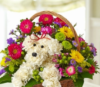 New baby flowers delivery colorado springs co sandys flowers gifts a dog able in a basket in colorado springs co sandys flowers mightylinksfo