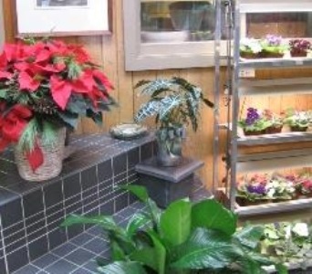 The Design Gallery in Connellsville PA, The Grasso Greenhouses