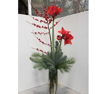 Amaryllis By Morning in Oklahoma City OK, New Leaf Floral Inc