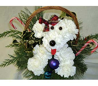 NOEL THE CHRISTMAS PUPPY in Hagerstown MD, Chas. A. Gibney Florist & Greenhouse