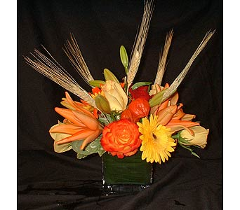 Fall Cube Mix in Dallas TX, Z's Florist
