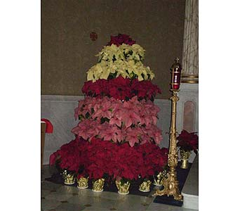 A POINSETTIA TREE in Hanover PA, Country Manor Florist