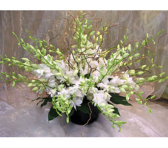 Luxurious White Orchids in West Los Angeles CA, Westwood Flower Garden